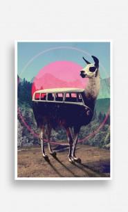Poster Llama Kombi